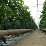 Olcsóbb lehet a termálvíz visszasajtolása, de a legtöbben inkább fizetik a bírságot