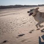 A németeknek naponta kétszer le kell vinniük a kutyájukat sétálni