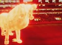 Gigantikus lángoroszlán sétált végig egy argentin stadion lelátóján