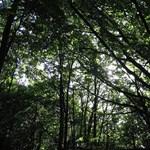 Két év után találták meg az önjelölt Houdini csontvázát az erdő mélyén