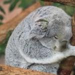 Tévedés lehet, hogy a fehér zaj jót tesz az alvásnak