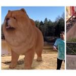 Egy egész digitális állatkertje van már a Google-nek, a mobilján ön is megnézheti