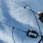 Magasfeszültségű vezeték végzett a szentesi gólyával