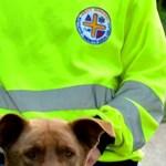 5 napig étlen-szomjan feküdt a forróságban egy ösvény mellett - kutya bukkant rá az idős nőre