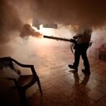2016 a zikavírus elleni harcról fog szólni? - Nagyitás-fotógaléria