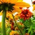 Legyen a színek mágusa egy különleges weboldalon!