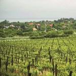 Uniós védettség alá került a csopaki bor