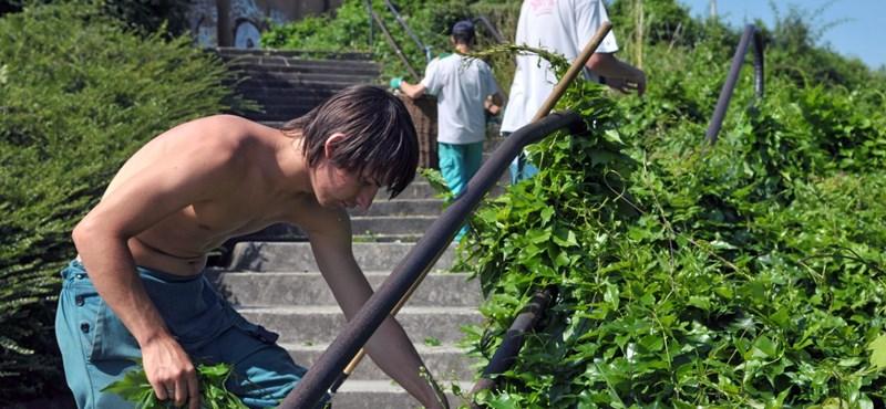Beszél japánul és programozónak készül? Verhetetlen fizetést kap nyári diákmunkásként