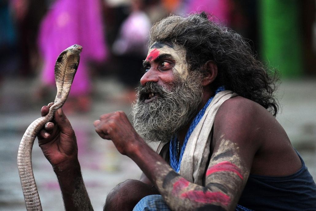 afp. hét képei - indiai kígyóbűvölő, 2014.08.28.