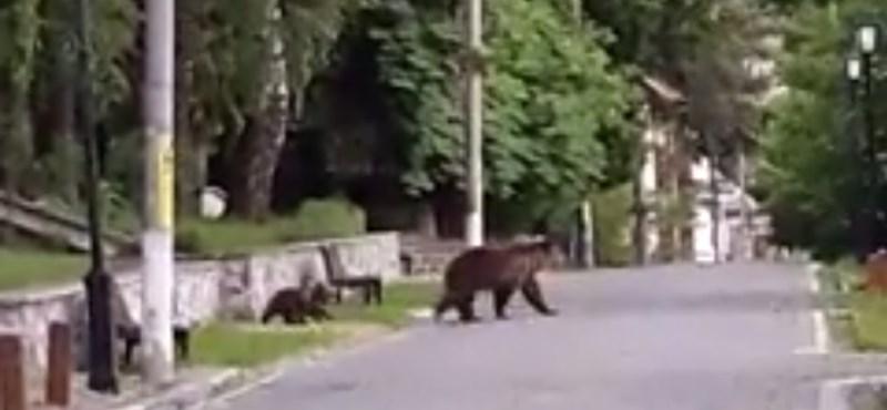 Medvét gázolt egy teherautó a román autópályán