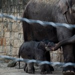 Kígyósimogatás, hiénaetetés – péntek este rendezik az Állatkertek éjszakáját