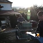 Így készül az idei bor: elkezdődött a szüret - Nagyítás-fotógaléria