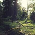 Visszavadítanak magyar erdőket egy természetvédelmi program keretében