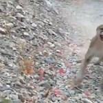 Videóra vette egy túrázó, ahogy percekig üldözi egy kifejlett puma