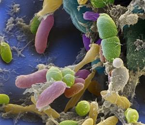 image Mikrobiom: a betegség és egészség új kulcsa
