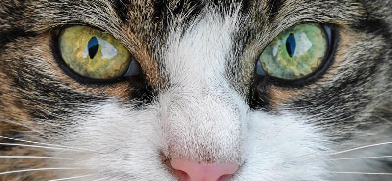 Drogcsempész macskát fogtak el egy orosz börtönben