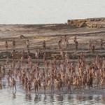 Fotó: tömegek vetkőztek meztelenre a Holt-tenger partján
