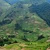 Napelempark telepítése miatt vágnak ki 89 hektár erdőt