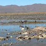Több mint kétmillió vadállat pusztult el a bolíviai erdőtüzekben