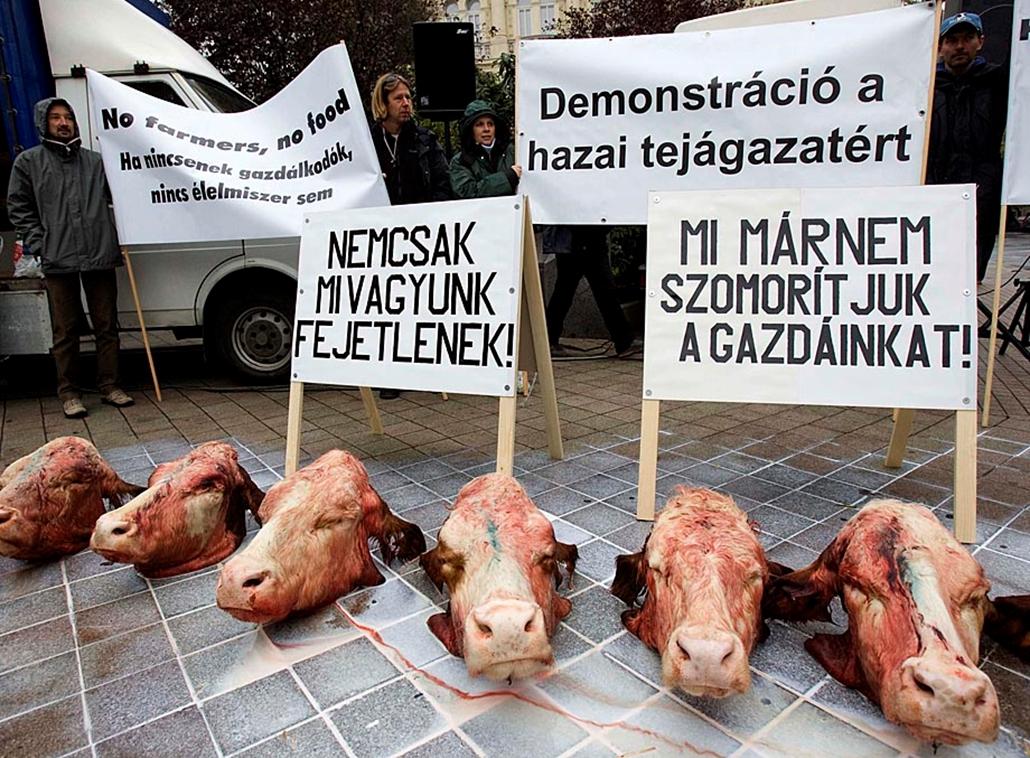 Sztrájkok,tüntetések az elmúlt években- Tejtermelők tüntetése 2009