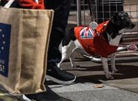 A koronavírus a Brexitet is megfertőzte