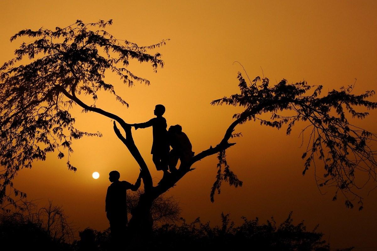 Ha az utolsó fát is kivágtuk... - Nagyítás-fotógaléria a fák napján