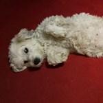 Hetekig őrizte gazdája holttestét, most új otthont keres a hűséges kutya