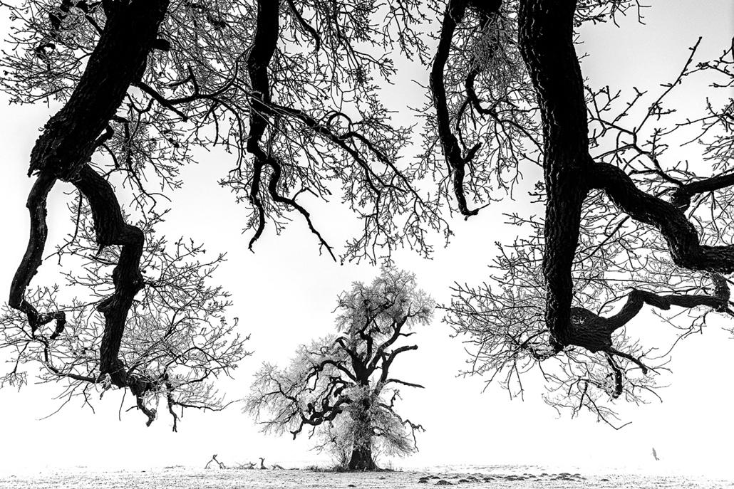 NE_! - XII. Fekete-fehér természetfotók - 1. díj - Ölelés - Az Év Természetfotója 2014, nagyítás