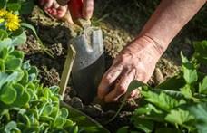 Több ezer alsónadrágot ásnak el a svájci kertekben, és ez a tudományt szolgálja