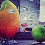 Mennyit ér egy mártás?  Reklámfogás volt a 7 tonnás mangó ellopása