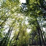 A fél éjszakát az erdőben töltötte egy eltévedt család Szögligetnél