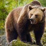 Ma van a napja, hogy a medve megmutassa, jön-e a tavasz