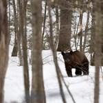 Mennyire hihető egy hároméves kisfiú sztorija arról, hogy egy medve vigyázott rá az erdőben?