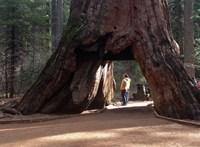 Minden, amit tudni szeretnél a fákról, de sosem merted megkérdezni