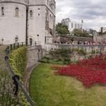 Pipacstenger borította be a londoni Towert – fotók
