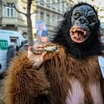 Fideszes tejjel kampányolt a Magyar Kétfarkú Kutya Párt