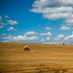 Szépen gyarapszik a Simicska–Nyerges-féle agrárbirodalom