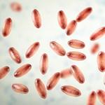 Bubópestis fertőzött meg két embert Mongóliában