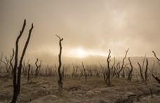 Új, eddig ismeretlen kihalási eseményt azonosítottak a kutatók