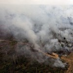 Konkrétan így gyújtják fel az őserdőt Brazíliában