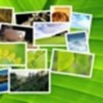 Készítsen látványos háttérképet kedvenc fotóiból, pillanatok alatt