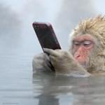 12 szót gépeltek le percenként, csupán a gondolataikkal a majmok