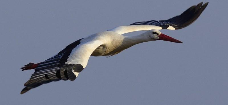 Gumiból készült pulikutyával és intelligens gyűrűvel védenék a madarakat