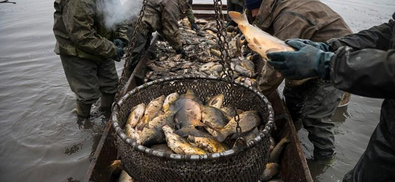 A ponty Magyarország kedvenc hala