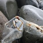 Műanyaghulladékok borítanak be egy mindentől távol eső szigetet