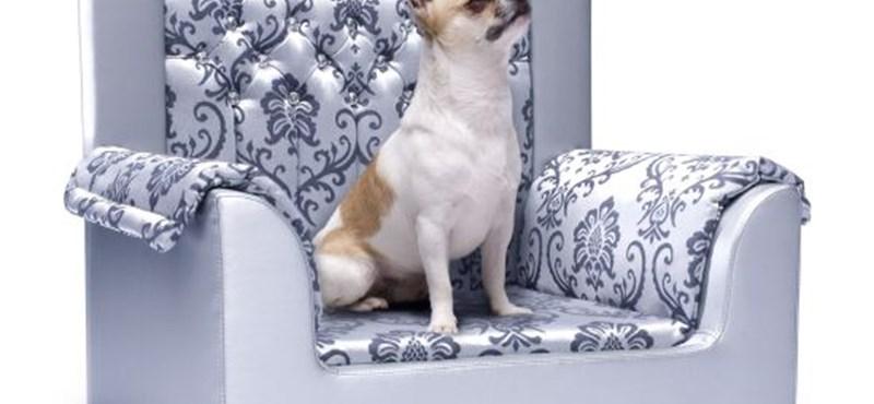 Swarovski kutyafotel gazdag házikedvenceknek