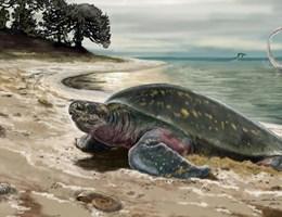 11 millió éves, 2 méteres óriásteknős maradványaira bukkantak Németországban
