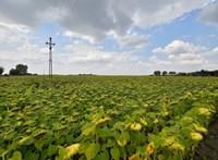Bulgária nem engedné külföldre mezőgazdasági idénymunkásait