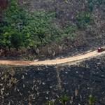 Jó érzés fát ültetni, csak éppen édeskevés a klímaváltozás elleni harcban