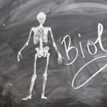 Az emberi testtől, az agy működéséig - appok mindenkinek, akit érdekel a biológia